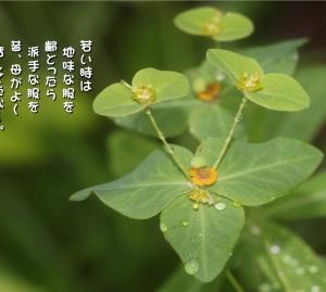 No.729 髙燈台 ( 花言葉:控えめ・清楚 )