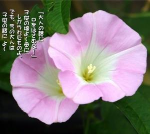 No.687 昼顔 (花言葉:絆・優しい愛情・和やかさ)