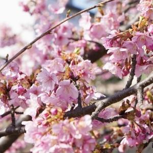 春が楽しめる土手散歩