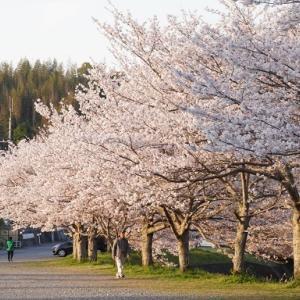 第一章 2020 桜