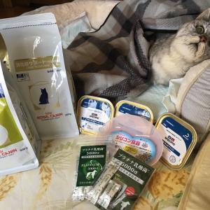 【動画】高齢猫用フードとシリコン食器をお試しで買ってみたよ