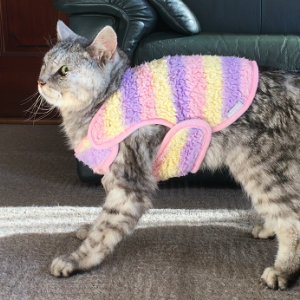 【動画あり】ミルが立ったー!老猫脳炎のリハビリ方法変更