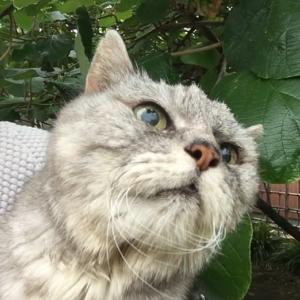 【あゝ 猫道vol.1】庭に現れた生後8か月の野良猫と出会って丸18年