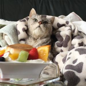 動物病院通院&毎年恒例生クリームのお裾分けされた猫|動画