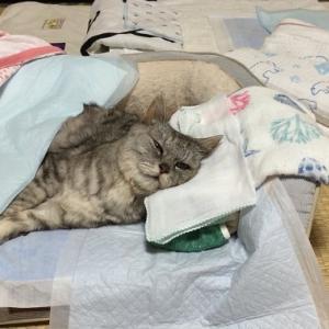 寝たきりの老猫『お布団セット』夏バージョンの紹介|動画