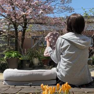 【2021 猫と花水木】ミルが亡くなって初めての花水木が咲いた
