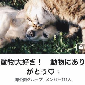 FBグループ「動物大好き!動物にありがとう♡」承認のための質問に答えてくださいね。