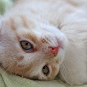 亡くなった動物への、その思いは愛ですか、それとも・・・