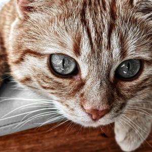 ご自分の動物と話す練習の最初が、「お片づけ」なのは・・・