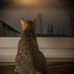 木星が射手座に入ったばかりだからか、大きなタームを思う満月の日