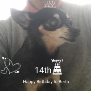 本日、末娘犬14歳のお誕生日♡