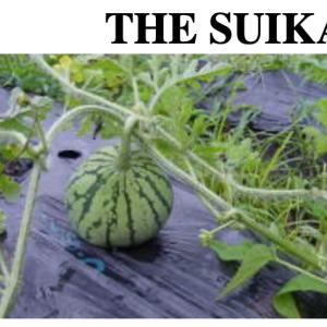 THE SUIKA
