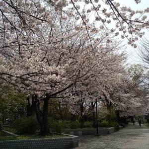 一之宮公園の桜