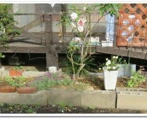 花壇つくりとケンハモ