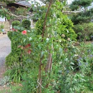 朝の庭とハックルベリージャムの完結