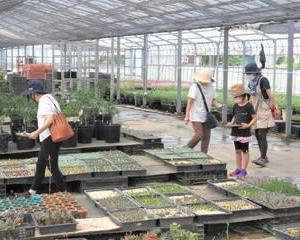 多肉植物の寄せ植えワークショップ & パンジーの苗