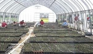 よく咲くスミレの植え込み & ビオラの苗