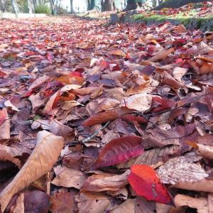 落ち葉でクリスマスツリー構想。