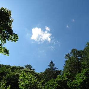 軽井沢野鳥の森 ことり便り3 2020。【2020.7.2】