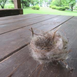 ことりの巣。