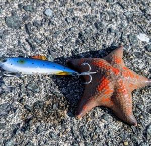 博多湾、ヒトデ釣り・・・。