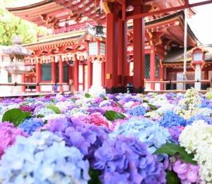 梅雨に入って、花手水の季節になってきました。