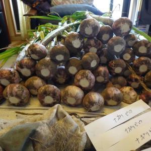 ニンニク2020:収穫~ナポリピンク