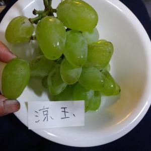 ぶどう「涼玉」(りょうぎょく)