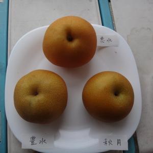 梨3種(豊水、恵水、秋月)