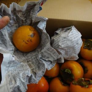 実家の富有柿、お友達の家の次郎柿