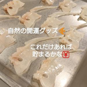 鯛の鯛!!