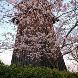 ★桜満開・黒鯛釣れだす★