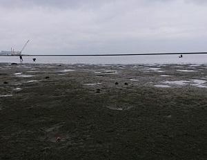 ★三番瀬で蟹~貝~獲りからの最奥部で黒鯛釣り★