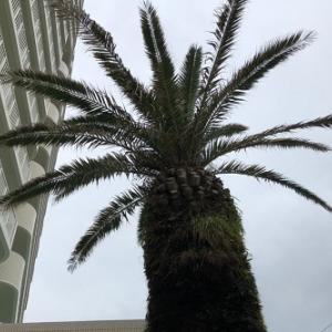 ★RFC白浜リゾートでクマノミ釣れたぁーー!★