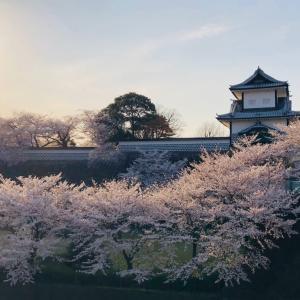 兼六園と松任駅の桜2020