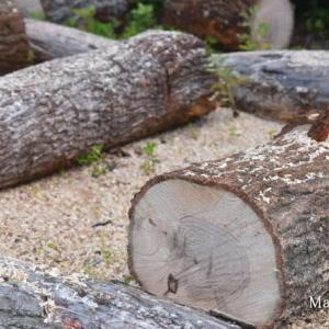 薪ストーブ:ノルンの薪の長さを考える / HETA - NORN