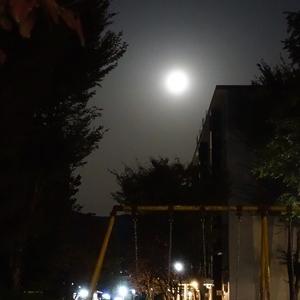 ハロウィンの月に思う