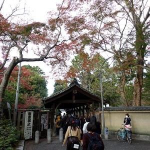 秋の京都が終わります
