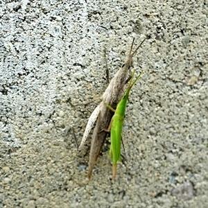 仲良し昆虫