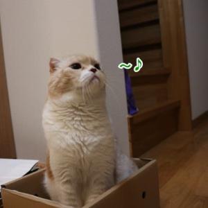 箱ラーレオ君の第2弾~♪
