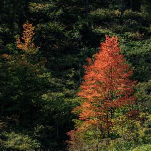 富良野・秋色の序曲