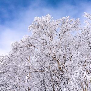 十勝岳・凍り付いた空間