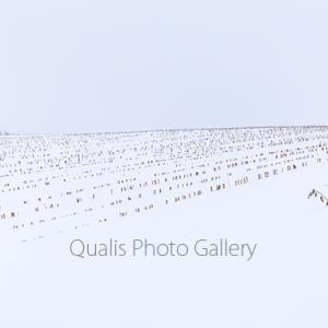 美瑛・雪の造形