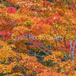 素敵な秋色だけを少しだけ・・・