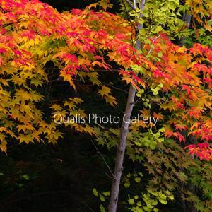 秋色の序曲・・・