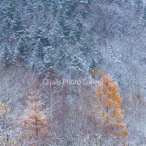 凍り付いた秋・・・