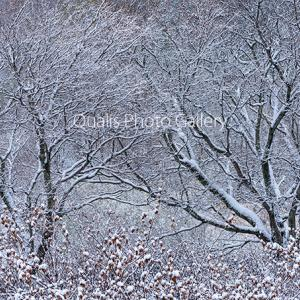 真冬の瞬間・・・