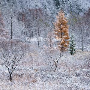 冬を探して・・
