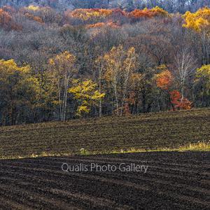 地上の秋のカケラ・・・