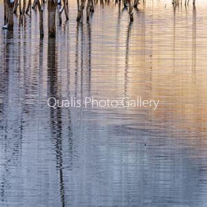 緋色と水の模様に魅せられて・・・
